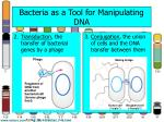 bacteria as a tool for manipulating dna1