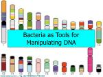 bacteria as tools for manipulating dna