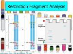 restriction fragment analysis1