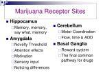 marijuana receptor sites