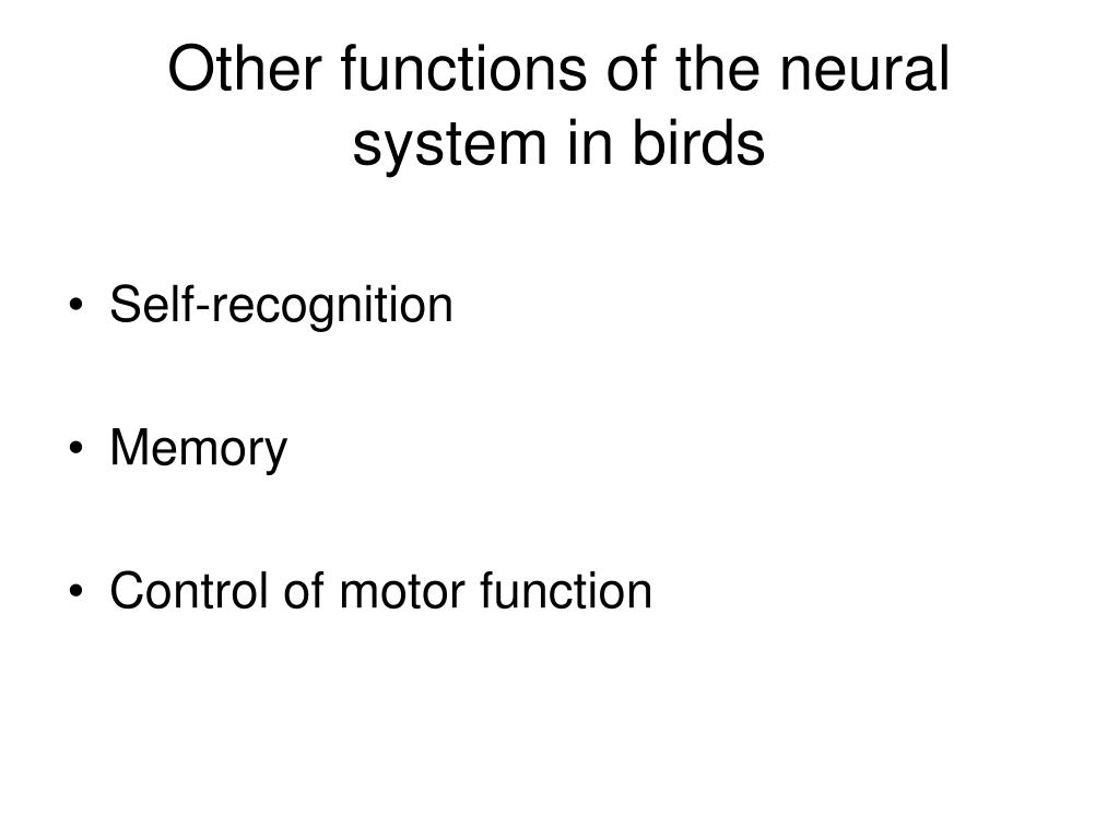 Other functions of the neural system in birds