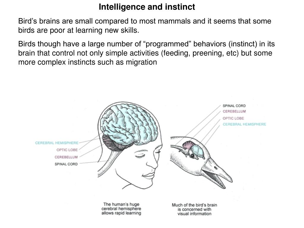 Intelligence and instinct