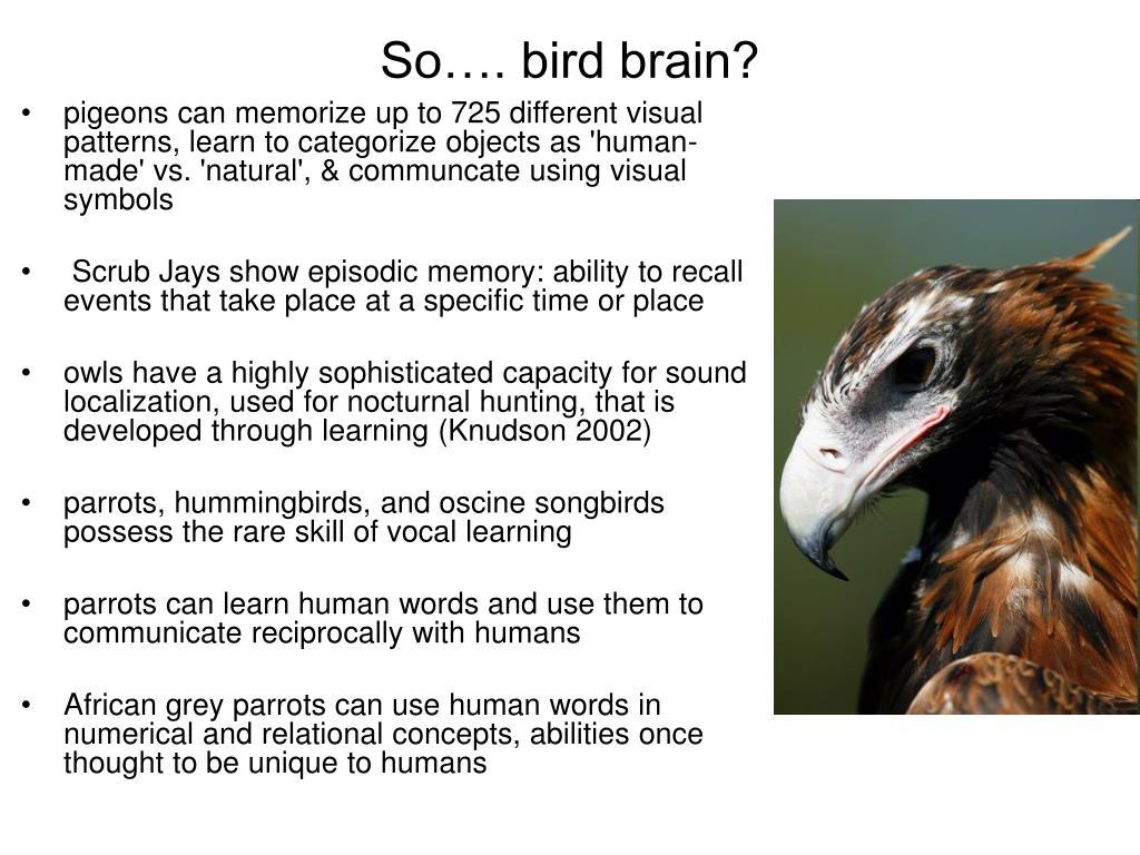 So…. bird brain?