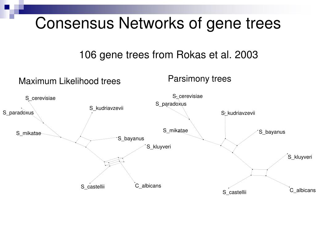 Consensus Networks of gene trees