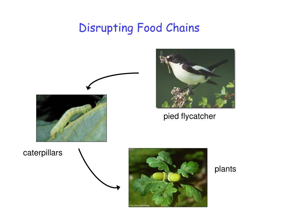 Disrupting Food Chains