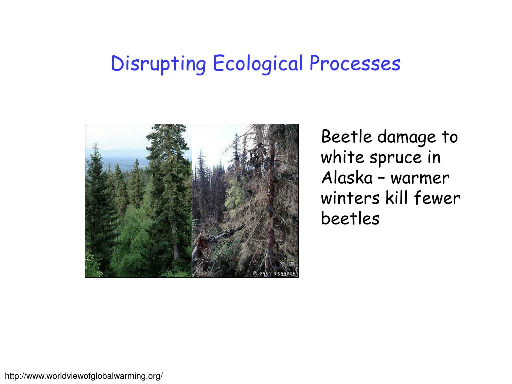 Disrupting Ecological Processes