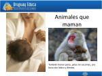 animales que maman