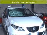 incidente con cervo