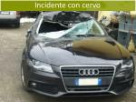 incidente con cervo1