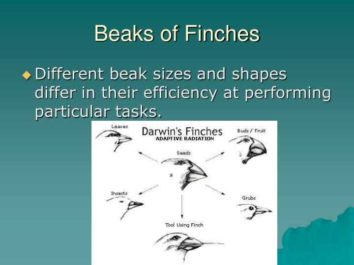 Beaks of finches1