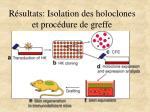 r sultats isolation des holoclones et proc dure de greffe
