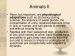 animals ii