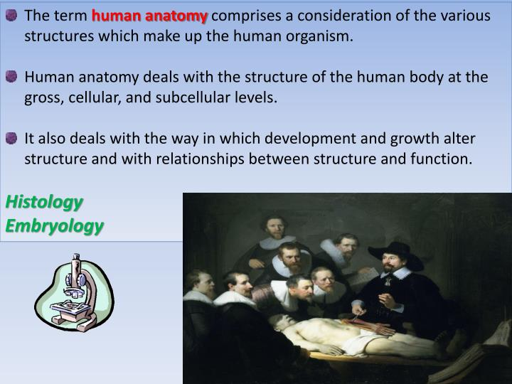PPT - INTRODUCTION TO ANATOMY TERMINOLOGY IN ANATOMY BONES &amp ...