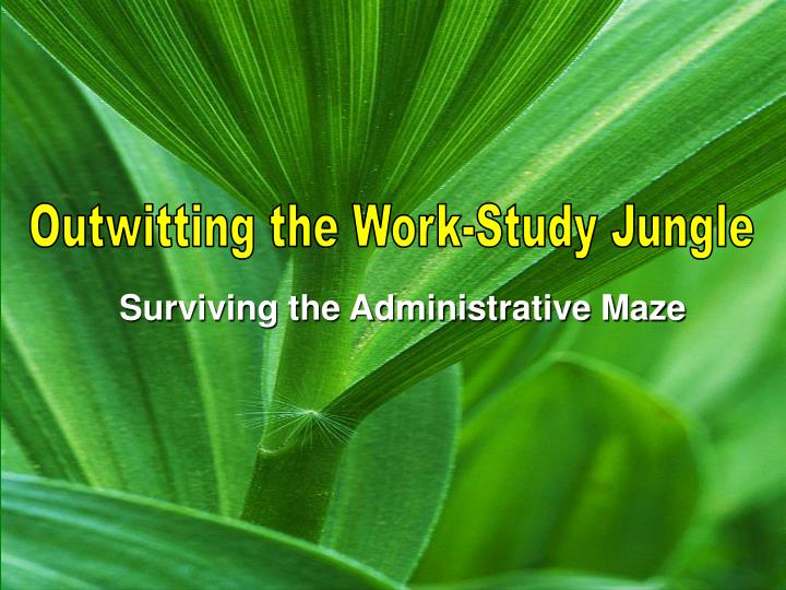 surviving the administrative maze n.