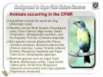 animals occurring in the cfnr