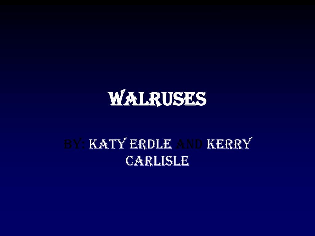 walruses l.