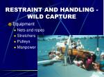 restraint and handling wild capture