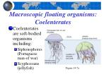macroscopic floating organisms coelenterates