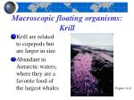 macroscopic floating organisms krill