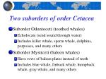 two suborders of order cetacea