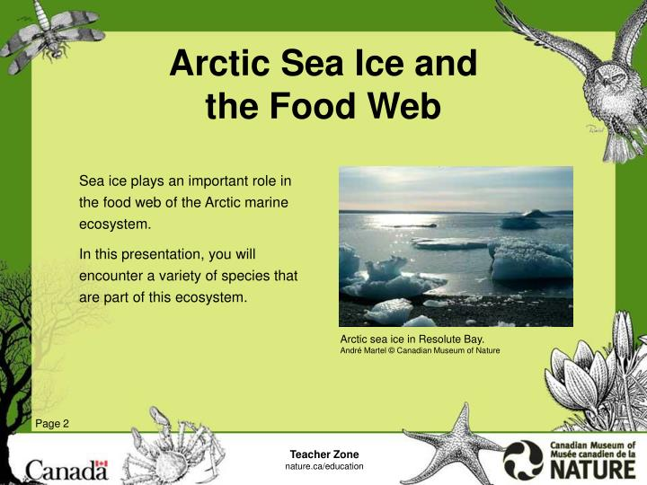 Arctic sea ice and the food web2