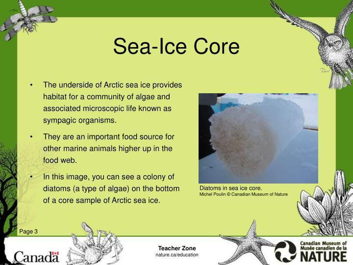 Sea ice core