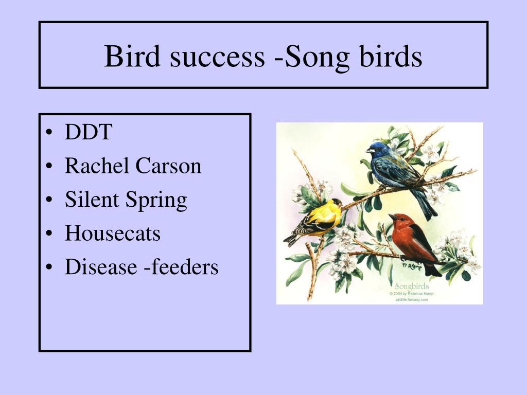Bird success -Song birds