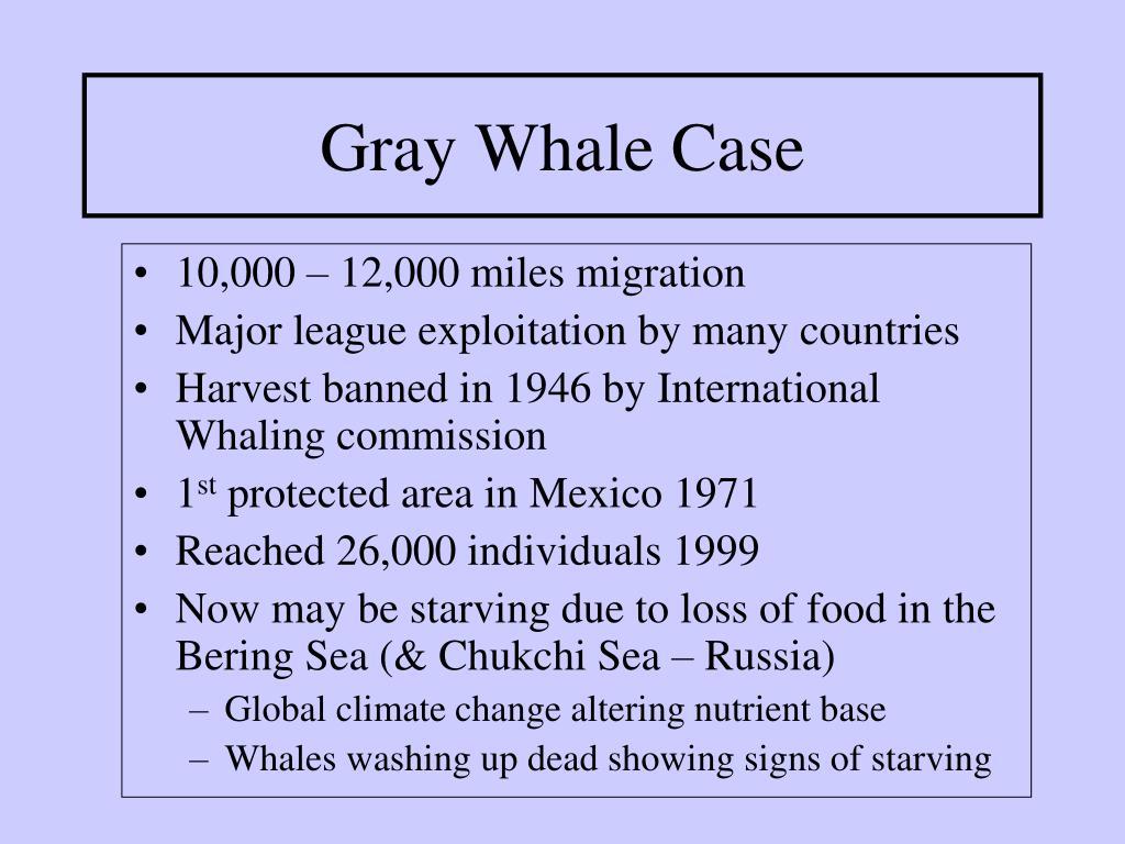 Gray Whale Case