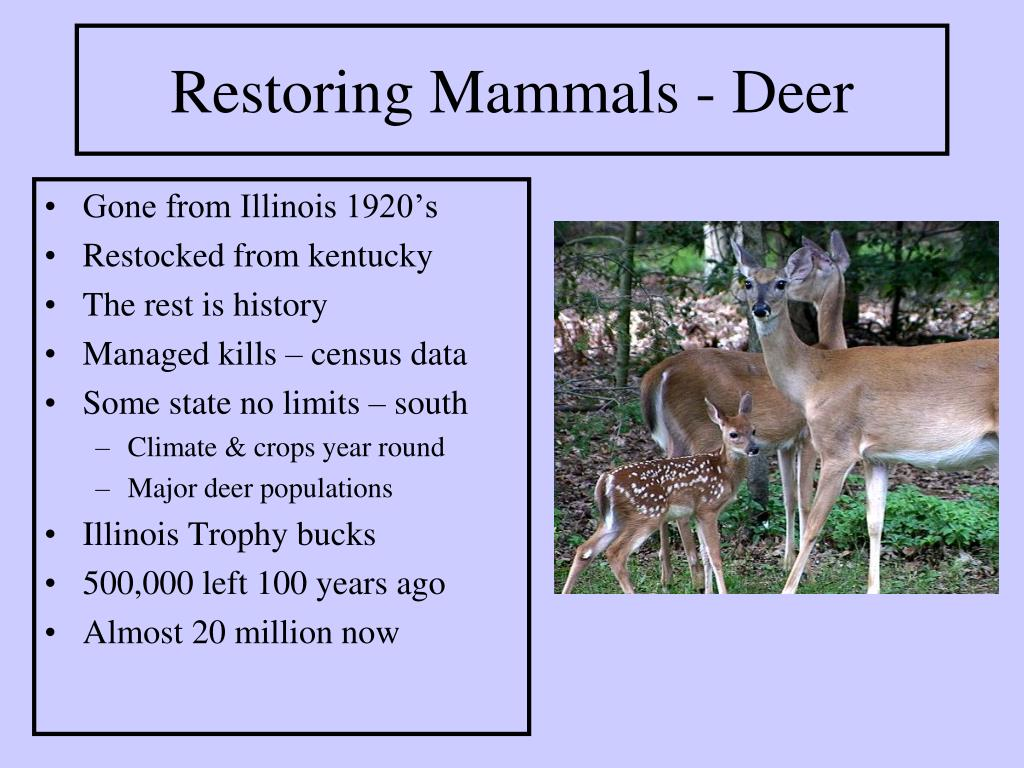 Restoring Mammals - Deer
