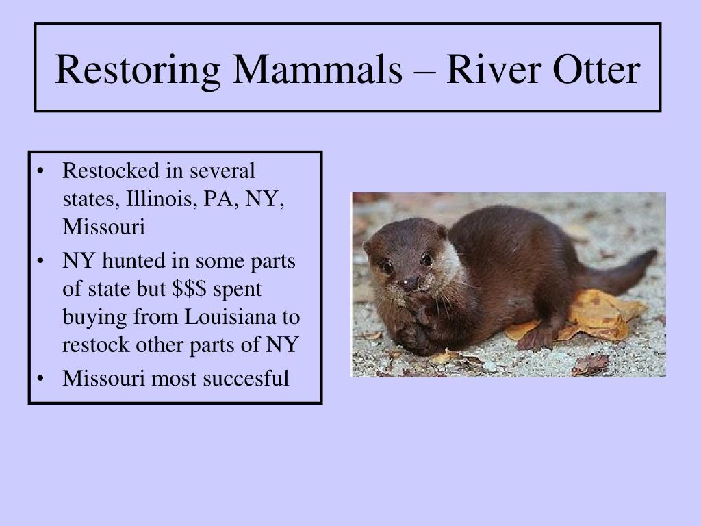 Restocked in several states, Illinois, PA, NY, Missouri