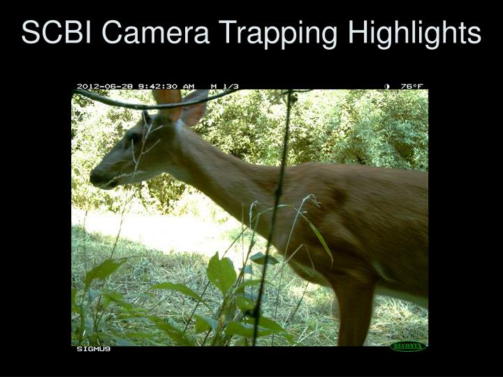 scbi camera trapping highlights n.