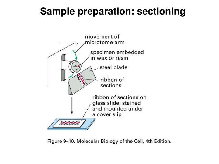 Sample preparation: sectioning