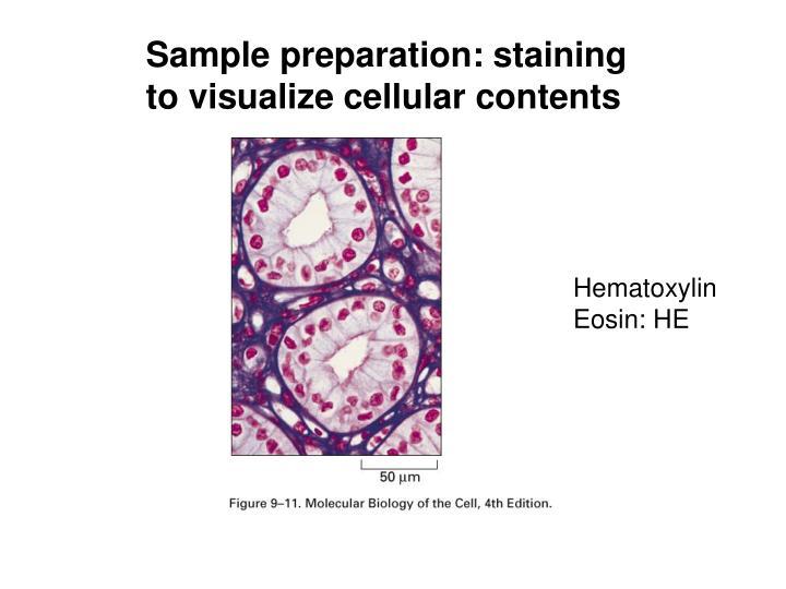 Sample preparation: staining