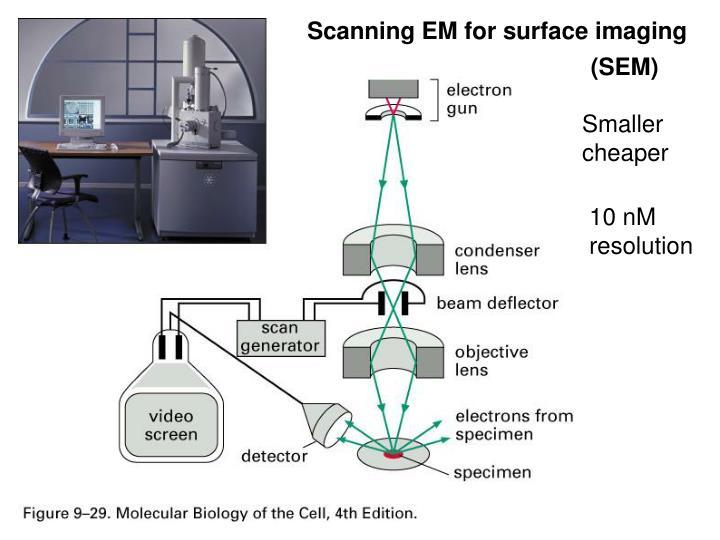 Scanning EM for surface imaging