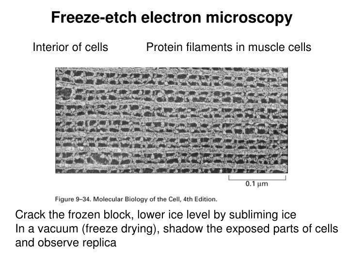Freeze-etch electron microscopy