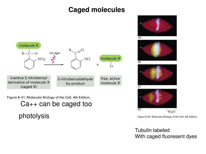 Caged molecules