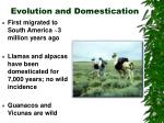 evolution and domestication