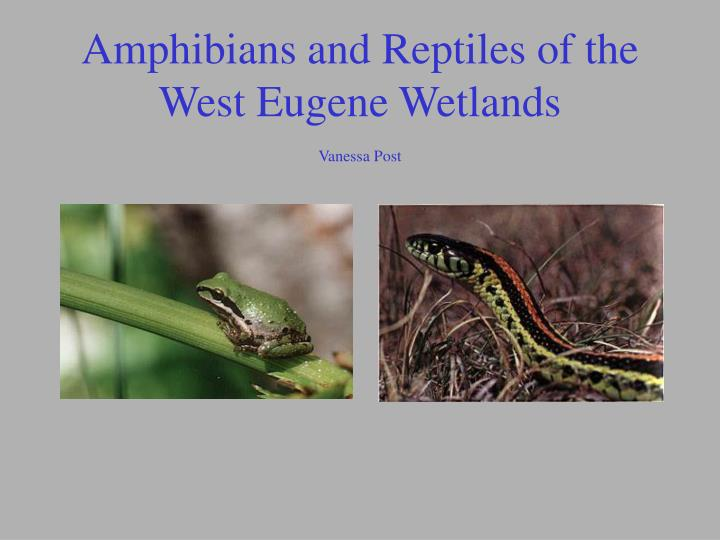 amphibians and reptiles of the west eugene wetlands vanessa post n.