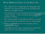 what different parts of the brain do