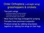 order orthoptera straight wing grasshoppers crickets