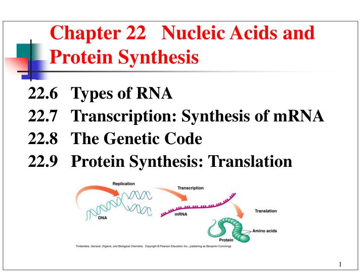 chapter 22 nucleic acids and protein synthesis n.