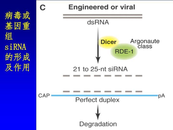 病毒或基因重组