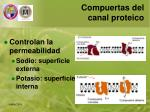 compuertas del canal proteico