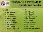 transporte a trav s de la membrana celular