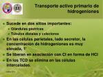 transporte activo primario de hidrogeniones