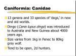 caniformia canidae