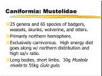 caniformia mustelidae