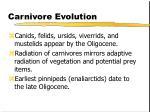 carnivore evolution35