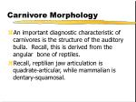carnivore morphology19