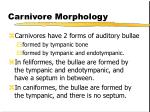 carnivore morphology21